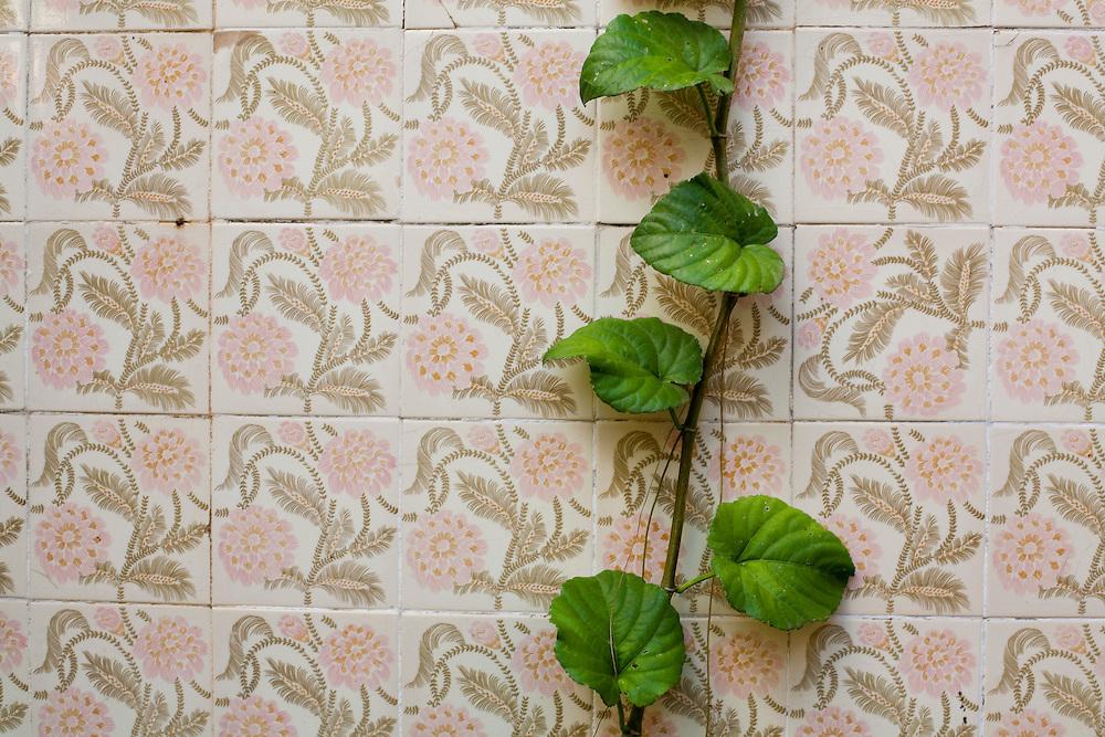 Tres Coracoes_MG, Brasil...Detalhe de uma planta no azulejo...A plant detail on tiles...Foto: LEO DRUMOND / NITRO.....