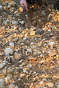 Truffle soil and pick at La Truffe de Ventoux truffle farm, Vaucluse, Rhone, Provence, France