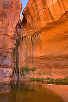 Choprock Canyon, Grand Staircase Escalante National Monument Utah