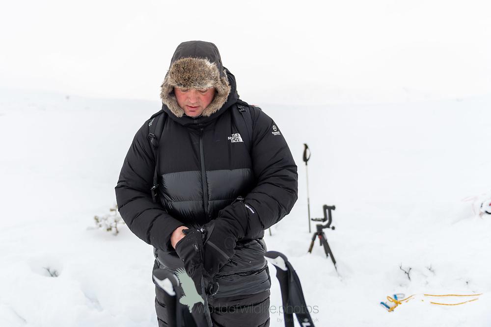 Musk_Ox in Dovrefjell 20191126.
