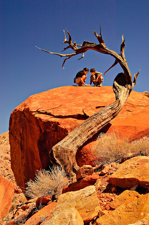 The remains of an old twisted juniper (Juniperus osteosperma) frame AJ (age 10) and LB (age 8) at Wolverine Petrified Wood Natural <br /> Area in Escalante National Monument, Utah, the second-largest fossil forest of its<br /> age in the world.
