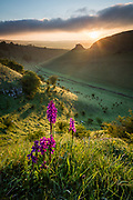 The sun breaks over Peter's Stone in Cressbrook Dale and backlights a group of Early Purple Orchids. A beautiful Spring morning in the Peak District National Park. Derbyshire, England, UK. Finalist, International Garden Photographer of the Year 2016 (Wildflower Landscapes category)