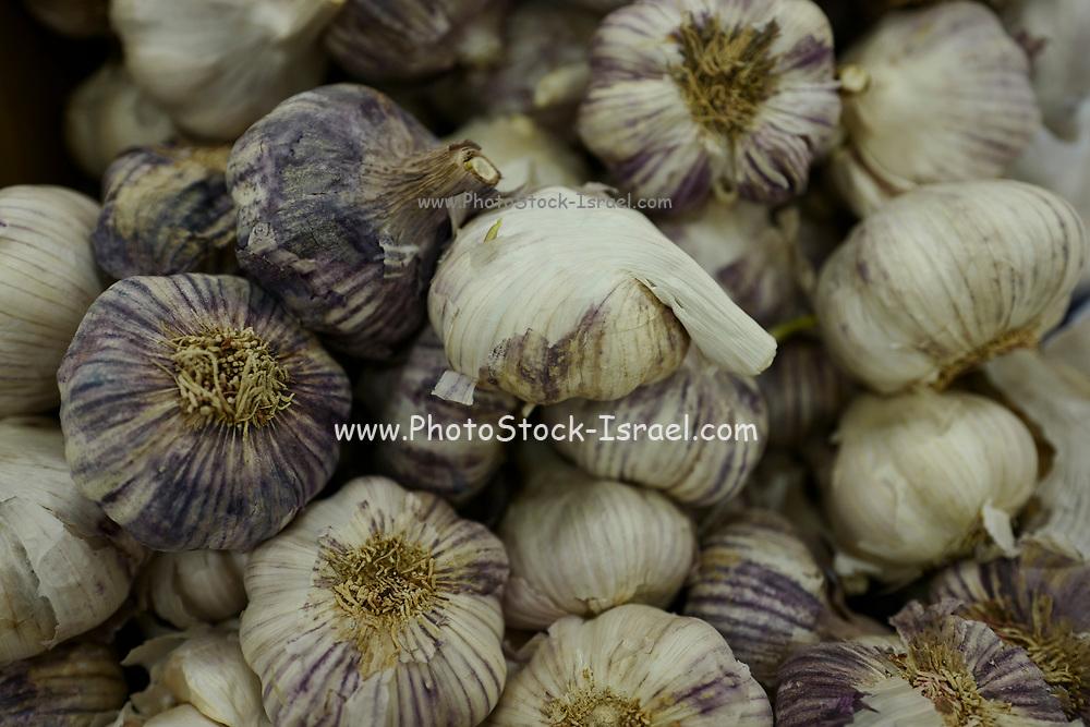 Allium sativum Garlic bulbs