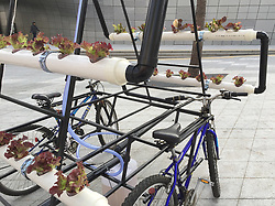 "August 9, 2017 - inconnu - Here's a farm for the big city – which fits on the back of a bicycle.The idea is to bring the experinces of urban farming to a larger community.The aptly named Bike Share Farm is a solar-powered planting system on wheels. Placed a top two interconnected bicycles, the hydroponic farm can be ridden from place to placeIt was inspired by bike share systems now prevalent in many major cities.The frame of the Bike Share Farm also allows for bicycles to be interchangeable.At each stop a new cyclist can attach his bike to the structure, replacing the existing bike. It was created by China's People's Industrial Design Office , known as PIDO .A team designed and built it during a 72 hour hack-athon in Seoul , South Korea organised by Art Center Nabi. The project asked people to consider the theme of sharing technology and ecologvy in large conurbations.Design rofessionals were asked to generate ideas on urban and ecological issues. Seoul is a massive city with many high-rise buildings but fe garden spaces for the I habitants. A spokeswoman for PIDO said:"" Mobile farms can make shared urban farming possible in such a dense megacity."" # POTAGER MOBILE GRACE A DES VELOS PARTAGES (Credit Image: © Visual via ZUMA Press)"