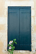 Traditional French shutters and Lavatera flowering shrub at St Martin de Re, Ile de Re, France