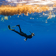 CNN senior international correspondent Arwa Damon freedives beneath a matt of sargassum in the Sargasso Sea. The Greenpeace ship Esperanza during its expedition to the Sargasso Sea, a unique region in the North Atlantic Ocean that is home to a diverse array of marine life, including loggerhead and green sea turtles.  The journey will see Greenpeace and University of Florida researchers team up to study the impact of plastics and microplastics on marine life and the importance that the Sargasso's drifting Sargassum seaweed habitat has for the development of juvenile sea turtles.