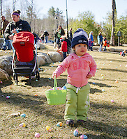 Abigail fills up her basket with eggs during the Weirs Beach Community Center's Easter egg hunt with Laconia Parks and Rec on Saturday morning.  (Karen Bobotas/for the Laconia Daily Sun)