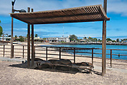 Bus stop with sea lions in the town of Puerto Baquerizo Moreno at San Cristobal (Chatham), Galapagos.