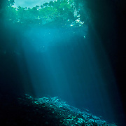 An underwater view of a blue hole on Eleuthera Island, Bahamas.