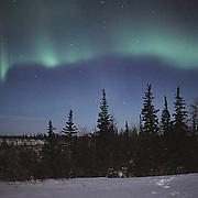 Aurora Borealis or Northern Lights near Churchill. Manitoba, Canada.