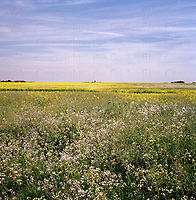View across farmland at West Wittering, West Sussex, England. Photographed by Terry Fincher