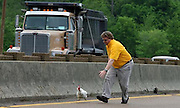 """(FOR SALE) 30 April 09 (kpchick1)  by Karen Pulfer Focht: Charlie Yonkers, chases a chicken down the interstate trying to catch it on Thursday. He is a cab driver from South Haven who had been watching this chicken trapped on the side of the road for 24 hours. It was on I55 near Riverside Drive. """"I know it is just a chicken, but it was suffering"""" he said."""