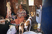 OLD AGE POVERTY. Rocinha Favela, Rio de Janeiro, Brazil, South America. Poor single old woman living in a shanty with her dogs for company. Although Rocinha is technically classified as a neighborhood, many still refer to it as a favela. It developed from a shanty town into an urbanized slum. Today, almost all the houses in Rocinha are made from concrete and brick. Some buildings are three and four stories tall and almost all houses have basic sanitation, plumbing, and electricity. Compared to simple shanty towns or slums, Rocinha has a better developed infrastructure and hundreds of businesses. There is also lots of deliquency, crime and drugs in the favelas.