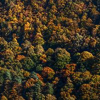 2018 - Autumn - Hebden Spring Wood