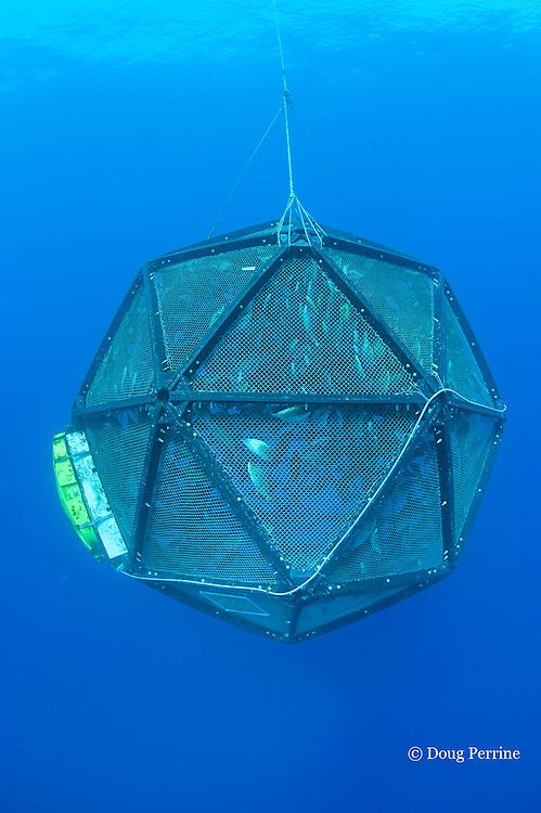 drifting, unanchored underwater fish cage or aquapod, used for open ocean fish pen aquaculture by Kampachi Farms LLC, holds Kona kampachi, Seriola rivoliana, also known as Hawaiian yellowtail, kahala, or almaco jack, Kona Coast, Hawaii Island ( the Big Island ), Hawaiian Islands ( Central Pacific Ocean )