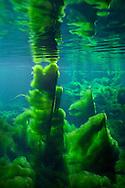 Lyngbya<br /> <br /> Isaac Szabo/Engbretson Underwater Photography