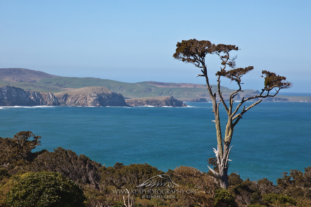 """Papatowai's slogan is """"Where the Forest Meets the Sea"""", Catlins, New Zealand"""