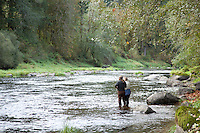 Salmon fishing on the Alsea River, Oregon. Salmon feed entire ecosystems when they return to their natal rivers. From animals to humans to insects to streamside vegetation.