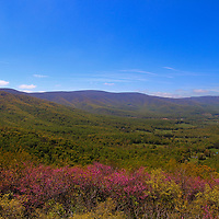 """""""Purple Mountain Majesty""""<br /> <br /> Wonderful Red Bud blossoms and early spring leaves make a lovely scenic view of the Blue Ridge Mountains.<br /> <br /> The Blue Ridge Mountains by Rachel Cohen"""