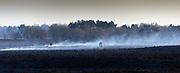 LEENDE; Grote bos heidebrand