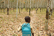 A boy wearing a unicef schoolbag walks through a rubber tree plantation outside the town of Faye, Bas-Sassandra region, Cote d'Ivoire on Monday March 5, 2012.