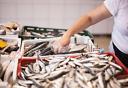 THEMENBILD - URLAUB IN KROATIEN, der Fischmarkt aufgenommen am 01.07.2014 in Porec, Kroatien // the Fish Market at Porec, Croatia on 2014/07/01. EXPA Pictures © 2014, PhotoCredit: EXPA/ JFK