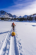 Backcountry skier, John Muir Wilderness, Sierra Nevada Mountains, California  USA
