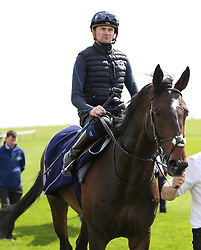 Master Singer ridden by Robert Havlin on the gallops during day one of The Bet365 Craven Meeting at Newmarket Racecourse, Newmarket.