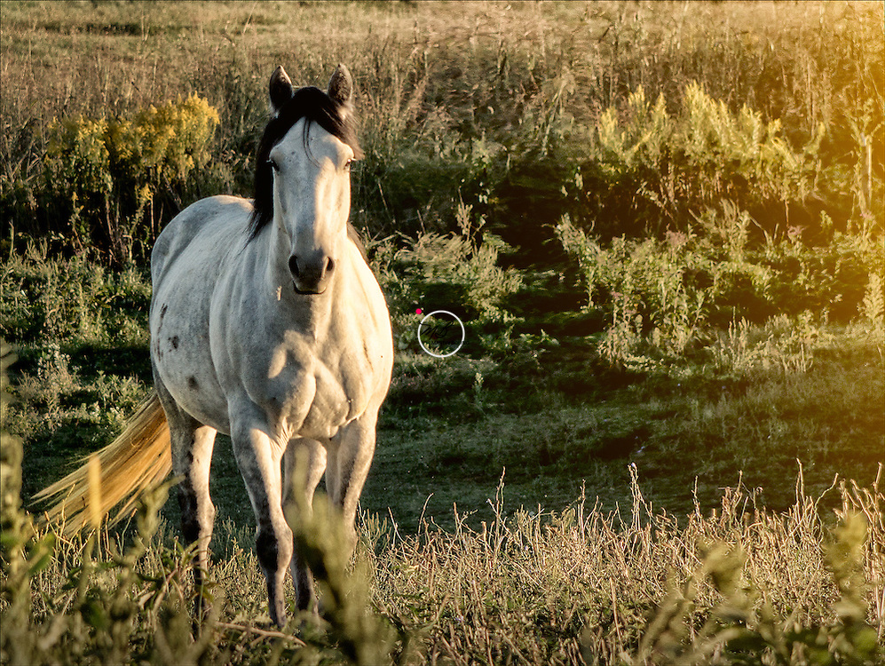 A Shot of Whiskey the Horse