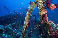 Soft Coral Encrusted Wreck
