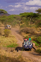 Safari vehicles touring Serengeti National Park, Tanzania