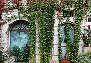 Old building facade draped with dense ivy, St Paul de Vence, Provance, France