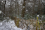 Snow in Highgate Woods on 24th January 2021 in London, United Kingdom. Highgate Wood is a 28 hectare area of ancient woodland in North London.