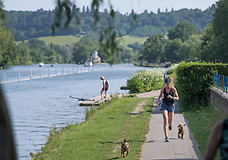 © Licensed to London News Pictures. 15/06/2021. Henley-on-Thames, UK. A woman jogging in the early morning sun, along the bank of the River Thames at Henley-on-Thames in Oxfordshire on a hot summer's morning. Photo credit: Ben Cawthra/LNP