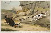 Terriers catching rats. Hand-coloured engraving, London, 1823