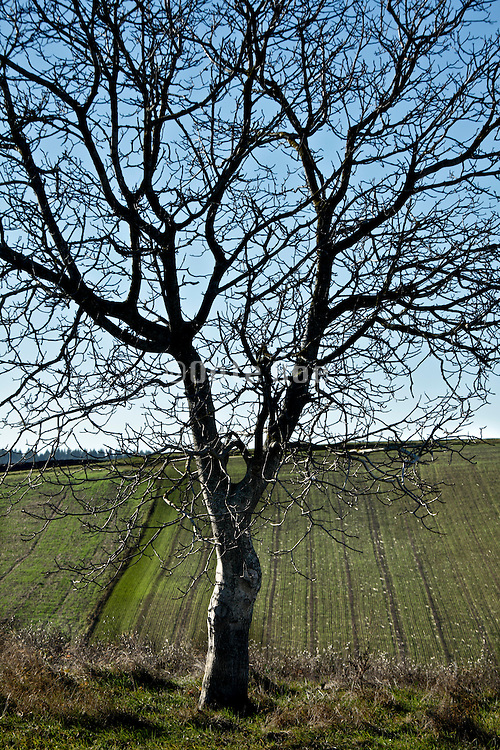 twigs branches and tree trunk silhouetted in rural landscape