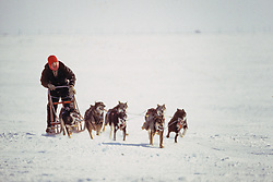 Lynda Plettner Mushing With Her Dog Team