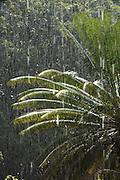 Palm tree reflection in rain<br /> Pandama Wines<br /> GUYANA<br /> South America
