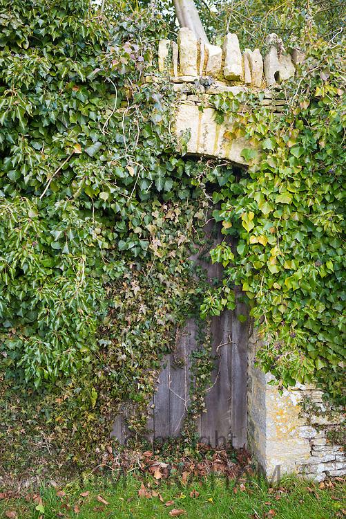Doorway with old oak door to secret garden hidden by overgrown climbing shrubs and leaves, The Cotswolds, UK