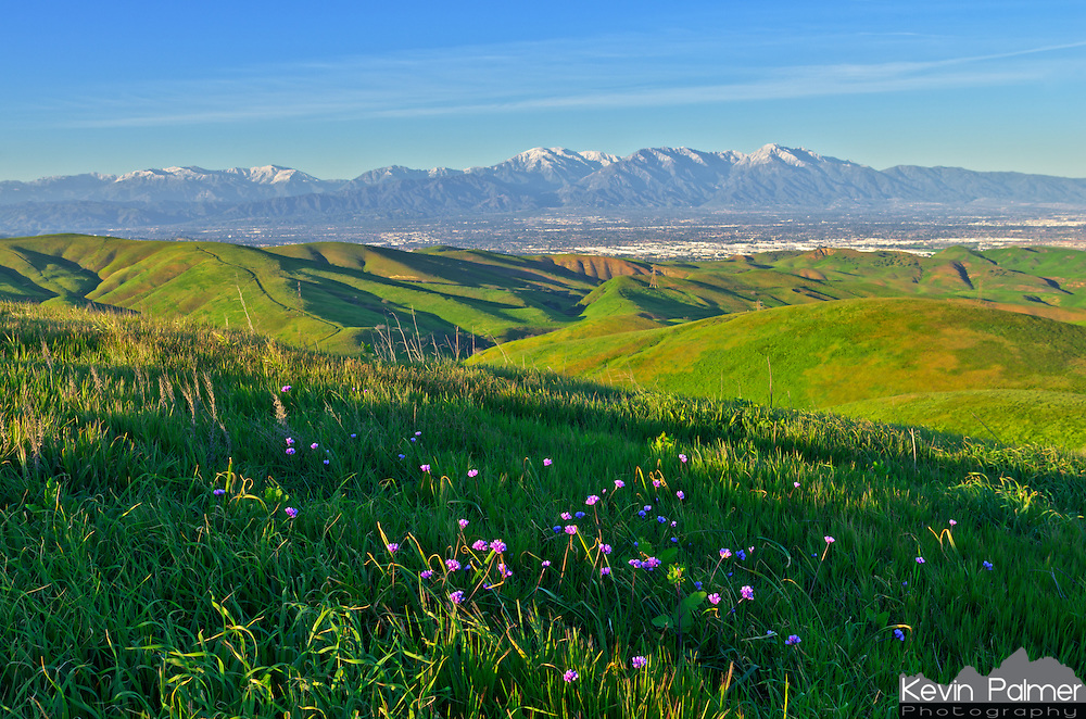 Purple wildflowers bloom in the verdant Chino Hills with the snow covered San Gabriel Mountains in the background.<br /> <br /> Date Taken: February 24, 2015