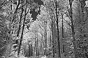 Forest <br />Nestor Falls<br />Ontario<br />Canada