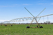 Mobile lateral move irrigation boom system in field near Inglewood, Queensland, Australia. <br />