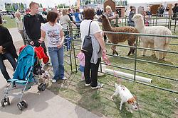 Looking at  Alpacas at Newark Show 2009