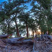 Pile of dead tree wood north of Stafford Kansas, July 2011.