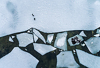 Aerial view of a man walking his dog on the frozen sea in Muraste, Estonia.