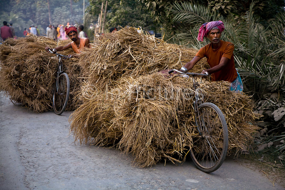 Farmers transport  straw on their heavily laiden bicycles, much need food for their livestock, Sonepur, Bihar, India.