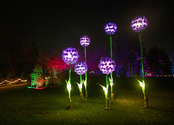 © Licensed to London News Pictures. 30/11/2018. London, UK. Illuminated Allium flowers line the trail at RHS Wisley Gardens. Trees and plants have been illuminated at Royal Horticulture Society Wisley Gardens for the Christmas Glow seasonal event. Hundreds of different lights can be seen when following the trail throughout the gardens opening 1 December 2018 2 January 2019. Photo credit: Peter Macdiarmid/LNP