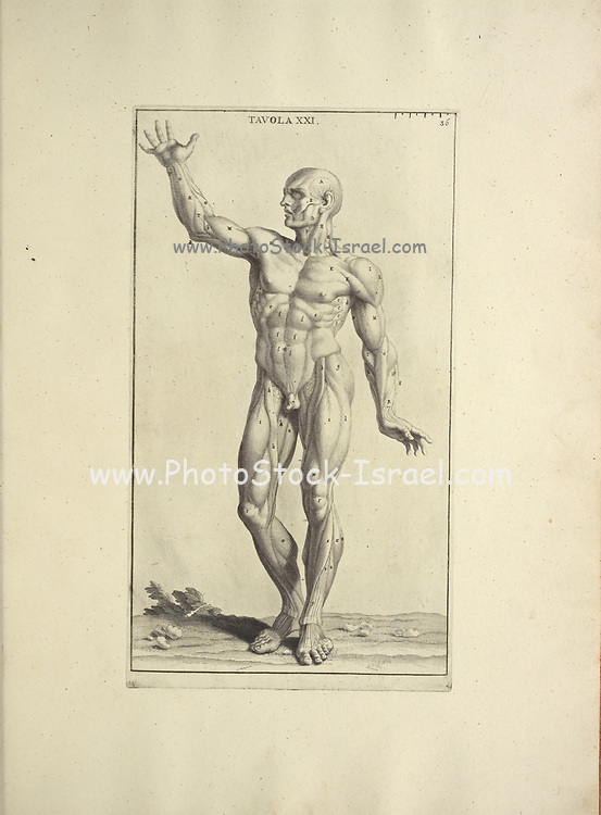 Male full body front woodcut print of Human Anatomy from Anatomia per uso et intelligenza del disegno printed in Rome in 1691