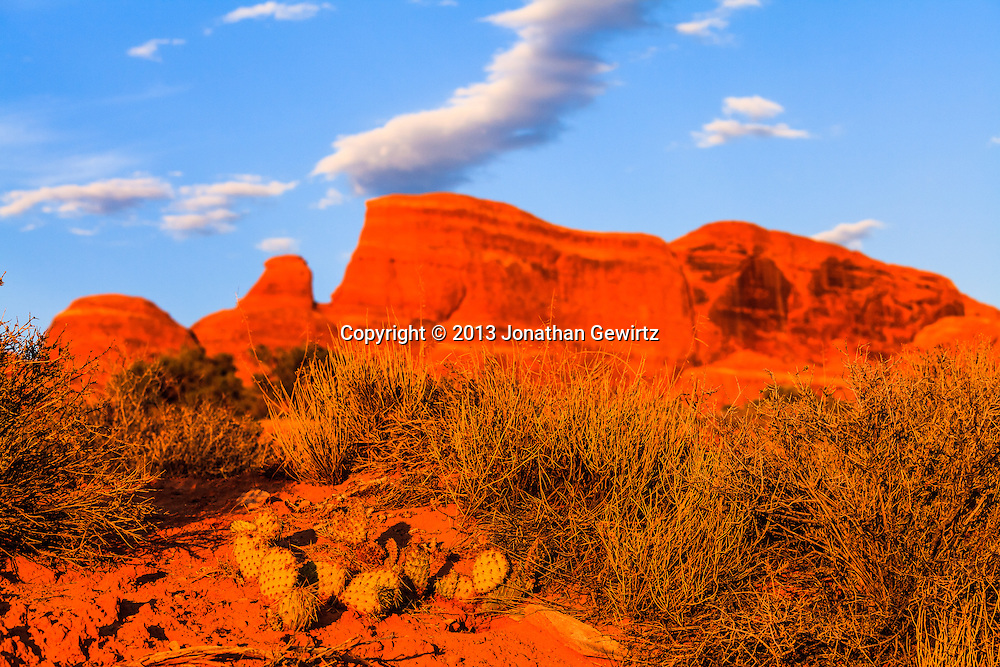 Cacti and other desert plants glow in the warm light of sunset in Arches National Park, Utah. WATERMARKS WILL NOT APPEAR ON PRINTS OR LICENSED IMAGES.