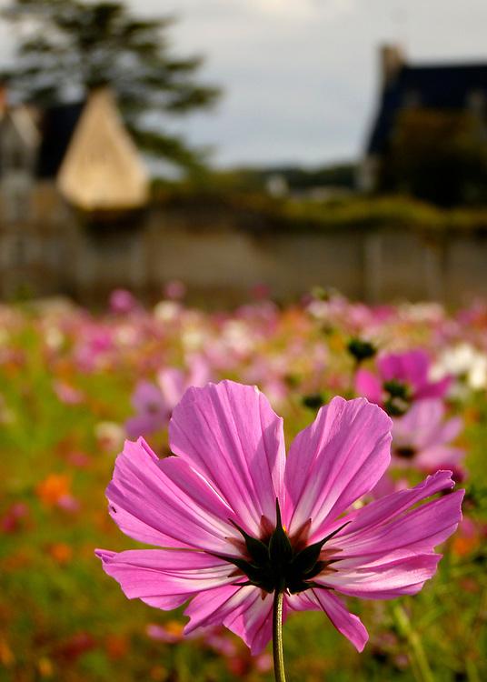 Flowers bloom outside of the medieval village of Montresor in the Dordogne region of France.